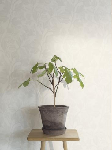 The wallpaper Fig from Engblad & Co. The wallpaper design and pattern is white and consists of Plants